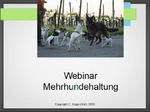 Claudia Kopp-Ulrich - Web-Seminar Mehrhundehaltung Teil 1 und 2