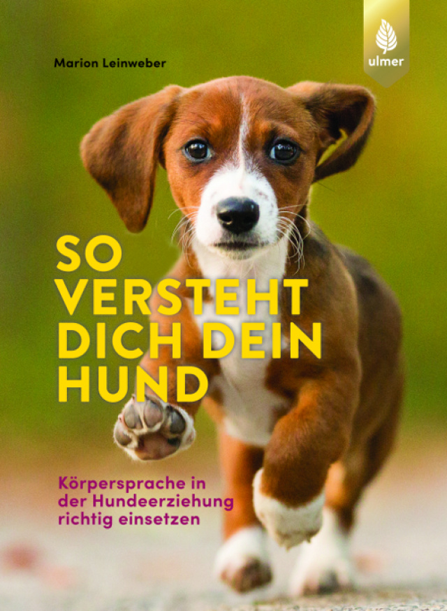 So versteht dich dein Hund: Körpersprache in der Hundeerziehung richtig einsetzen